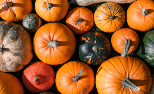 Ernährung im Herbst aus ayurvedischer Sicht