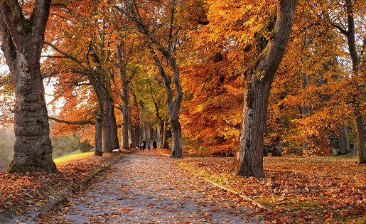 Ayurvedische Empfehlungen für den Herbst